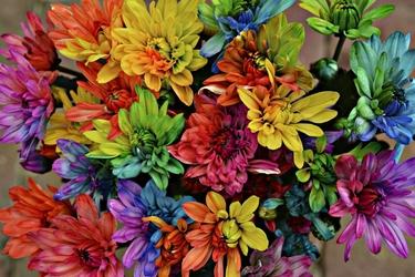 Fototapeta kwiat, bukiet 369