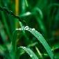 Fototapeta soczysta zieleń trawy fp 388
