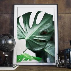Plakat w ramie - true monstera , wymiary - 20cm x 30cm, ramka - biała